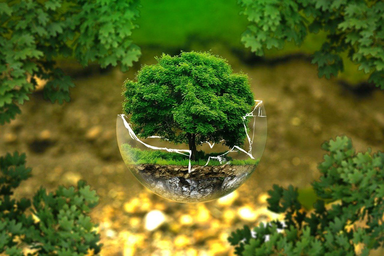 środowisko